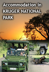 Tours and Safaris in South Africa